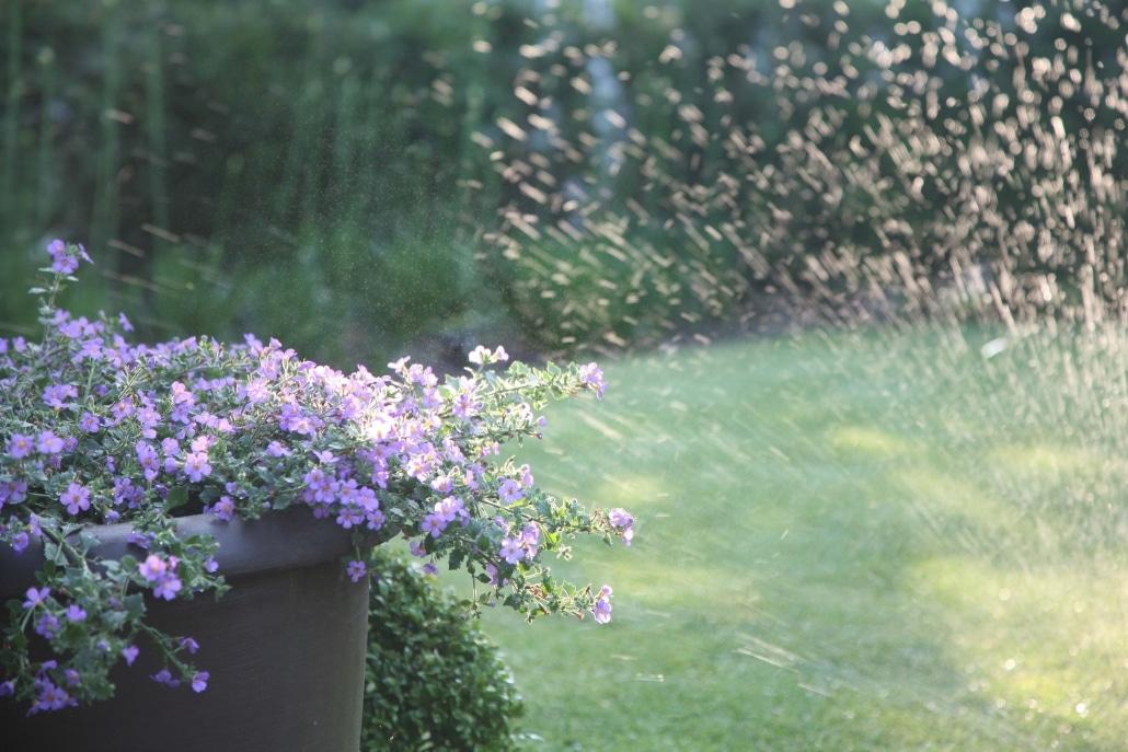 water en planten beregening lavendine